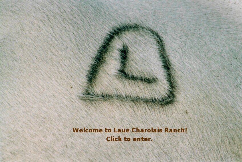 "Click on the ""Laue Charolais Ranch"" brand to enter our site."
